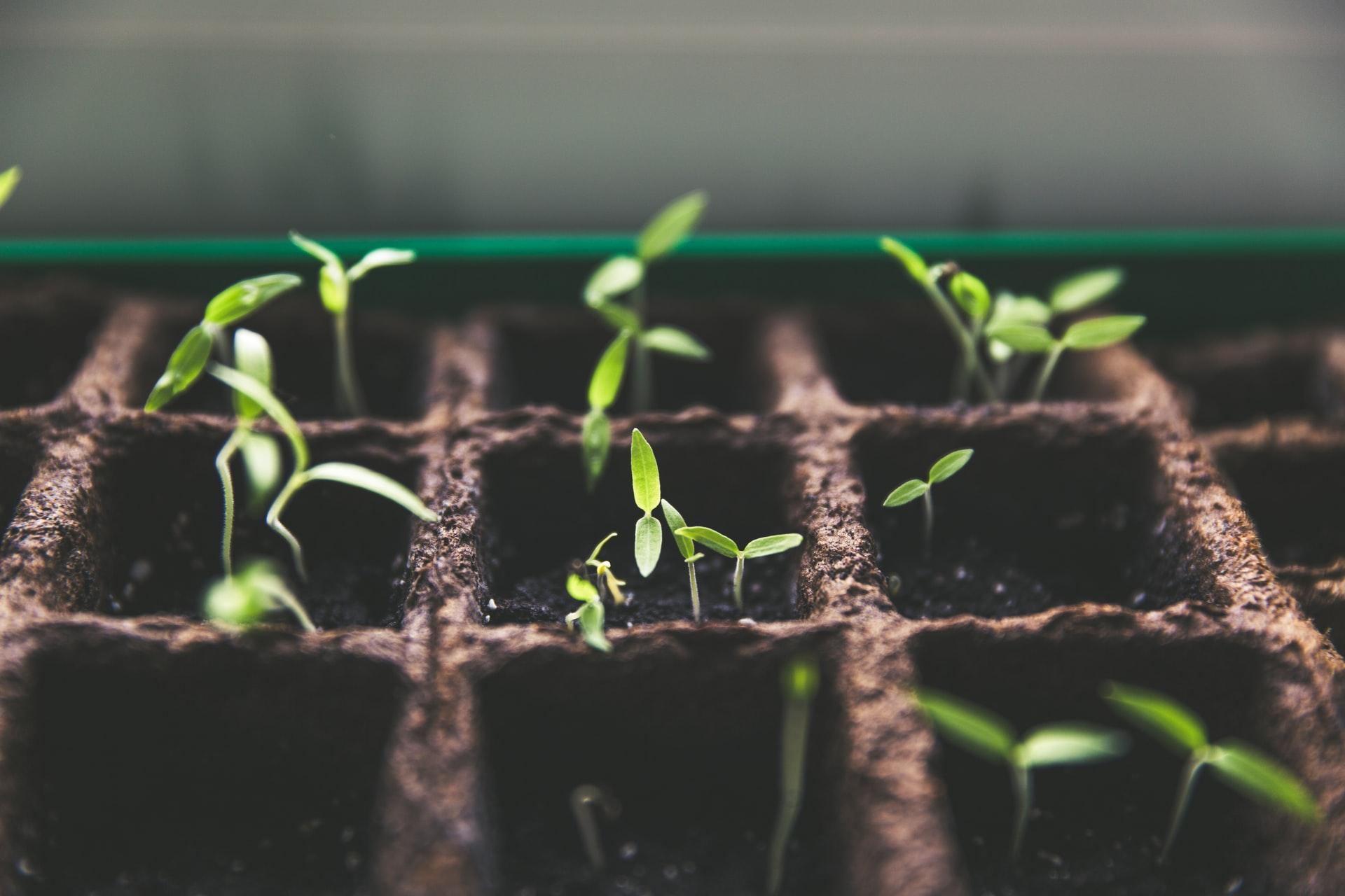 Image de plantes qui poussent